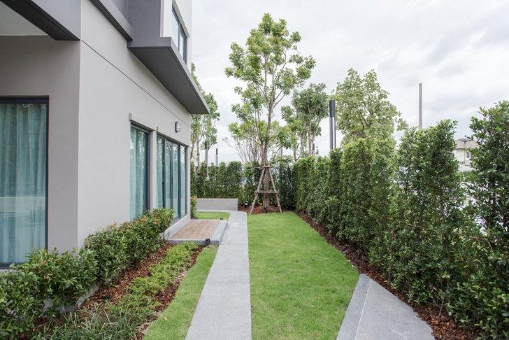 ปลูกต้นไม้ติดกำแพงให้มีสไตล์